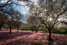 Spring landscape with flowers and blossoms Royalty Free Stock Photo