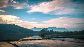 Beautiful field rice before plantation in the morning in village rural area with mountain in java. This place is in Garut, Java, Indonesia Royalty Free Stock Images