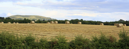 Beautiful field with straw bales in irish Stock Photos