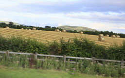 Beautiful field with straw bales in irish Royalty Free Stock Photos