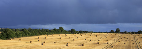 Beautiful field with straw bales and storm clouds Stock Photography