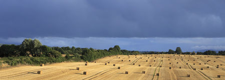 Beautiful field with straw bales and storm clouds Royalty Free Stock Image