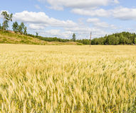 Beautiful field On A Summers Day. In Ostergotland, Sweden Royalty Free Stock Photography