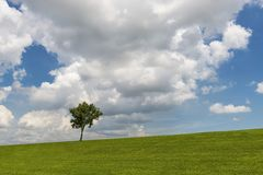 Beautiful field and tree against a blue sky Royalty Free Stock Photography