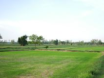 Beautiful field, tree landscape and clear sky background. Beautiful field, tree landscape and clear sky background in Thailand royalty free stock image