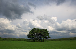 Beautiful field with trees in the center Royalty Free Stock Photos