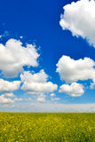 Beautiful field with wonderful sky Royalty Free Stock Photo