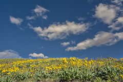 Beautiful field of yellow spring flowers stock image
