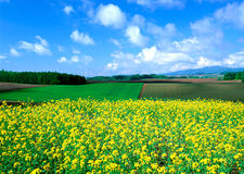 Beautiful fields Stock Image