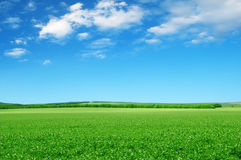 Beautiful  fields Stock Images