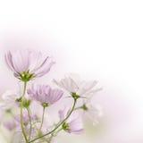 Beautiful fields flowers stock photography