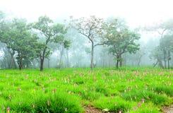 A beautiful Fields of flowers,Krachiao flower field. Royalty Free Stock Photography
