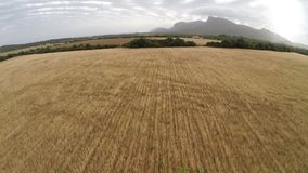 Beautiful Fields of Gold - Aerial Flight, Mallorca stock video footage