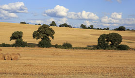 Beautiful fields after harvest in irish Royalty Free Stock Image