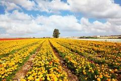 Beautiful fields Royalty Free Stock Image