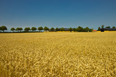 Beautiful fields and meadows of Jutland Royalty Free Stock Photo