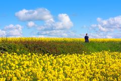 Beautiful fields of rape in Springtime Stock Photos