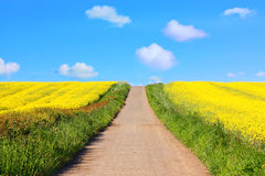 Beautiful fields of in Springtime Stock Photography