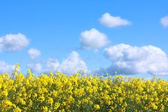 Beautiful fields of in Springtime Stock Photos