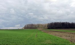 Spring field, trees  and beautiful cloudy sky, Lithuania Royalty Free Stock Image