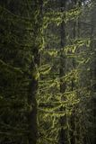 Stunning fine art landscape image of Winter forest landscape in Peak District in England. Beautiful fine art landscape image of Winter forest landscape in Peak stock photo