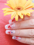 Beautiful fingers hold yellow flower. Beautiful fingers with manicure  hold yellow flower Stock Photography