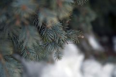Fir branch on a snowy background Royalty Free Stock Photography