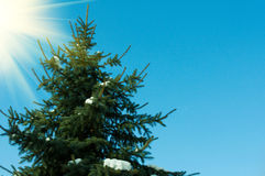 Beautiful fir-tree. Beautiful green fir-tree on the blue sky stock photography