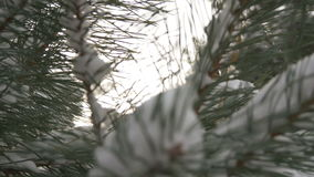 Beautiful fir tree covered with snow, close up view. Beautiful tree covered with snow, close-up view, in the frosty winter, the Christmas forest stock footage