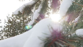 Beautiful fir tree covered with snow, close up view Stock Image