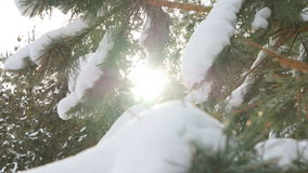 Beautiful fir tree covered with snow, close up view Stock Photography