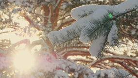Beautiful fir tree covered with snow, close up view Stock Images