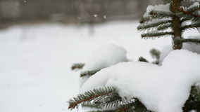Beautiful fir-tree in snow in winter and falling snow.  stock footage
