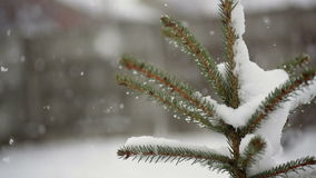 Beautiful fir-tree in snow in winter and falling snow.  stock video
