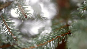 Beautiful fir-tree in snow in winter and falling snow.  stock video footage