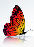 Beautiful fire-colored butterfly. On reflecting surface Royalty Free Stock Photo