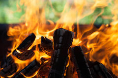 Beautiful fire with flames charred wood Stock Photos