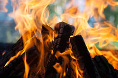 Beautiful fire with flames charred wood Stock Image