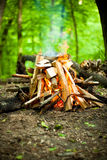 Beautiful fire in the forest Royalty Free Stock Photos