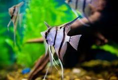 Free Beautiful Fish Stock Image - 14401961