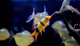 Beautiful fish. Stock Photo