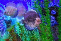 Beautiful fish Stock Images
