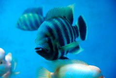 Beautiful fish royalty free stock photo