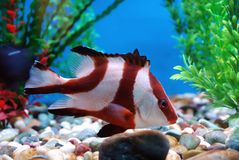 Beautiful fish royalty free stock images