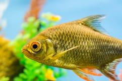 Beautiful Fish in the aquarium. At the exhibition Stock Images