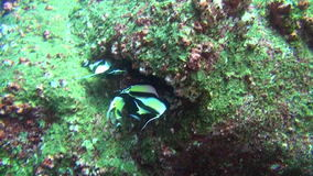 Beautiful fish on background underwater green landscape in sea of Galapagos. stock footage
