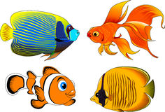 Beautiful fish. Collection of beautiful fish on a white background,  and illustration Royalty Free Stock Photo