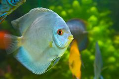 Beautiful fish Royalty Free Stock Photos