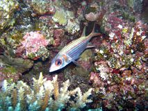 Beautiful fish in Red sea, Egypt royalty free stock photo