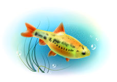 Beautiful fish in the sea. Royalty Free Stock Photos